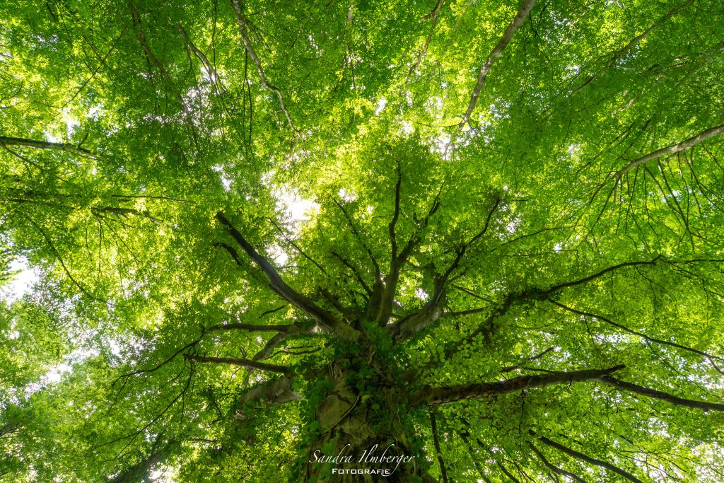 Wald - Ort der Inspiration