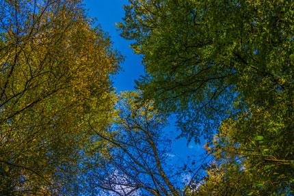 Blick durch das Blätterdach