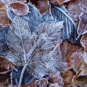 Eiskristalle an Blättern, Sandra Ilmberger
