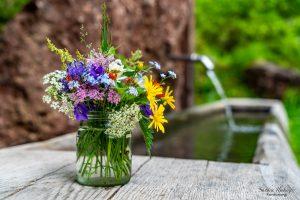 Wildkräuter und Blumen, Sandra Ilmberger